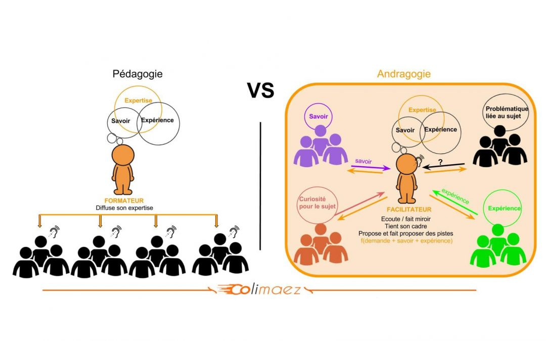 Pédagogie vs andragogie